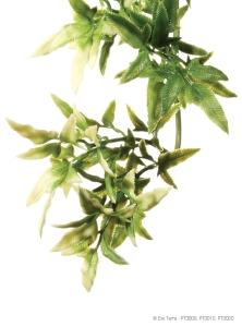 """Растение """"CROTON"""" маленькое"""