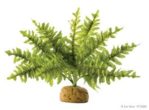 """Растение с подставкой """"Boston Fern"""" Medium"""