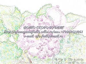 АВ-Яванский Мох (Фиалковод)Новинка 2014г.-укорен.черенок 0606
