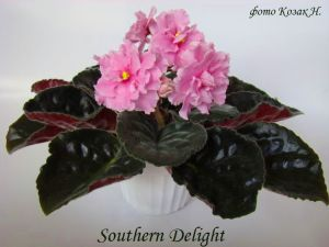 Southern Delight (LLG/Sorano)